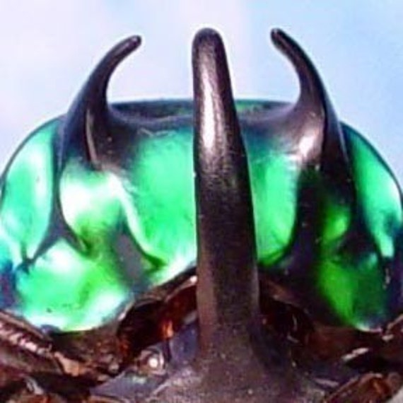 Real Green Devil Scarab Beetle Conservation Quality 2520M
