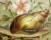 1895 Antique Brilliantly Coloured Chromolithograph of Snails or Slugs (or escargots, once they're on your plate)