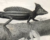 Antique Print of LIzards and Reptiles - Plate 89 - 1860 Vintage Engraving