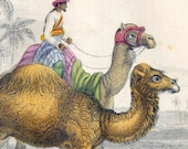 1853 Rare Antique Goldsmith Hand Coloured Copper Plate Engraving of Camels