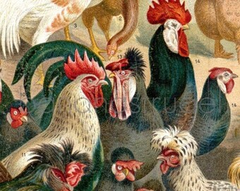 Antique Print of Chickens - 1895 Chromolithograph on Wooden Panel - Ready to Hang - Gift for Her