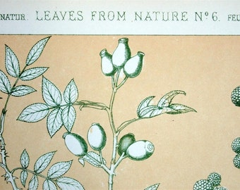 1865 Simply Stunning Antique Chromolithograph from the Grammar of Ornament by Owen Jones. Leaves from Nature No. 6. Plate 96