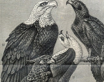 1894 Antique German Engraving of Eagles