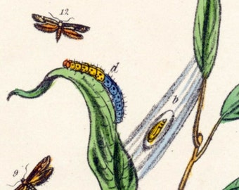 Vintage Botanical Print of Plants and Insects. Plate 111 - Handcolored