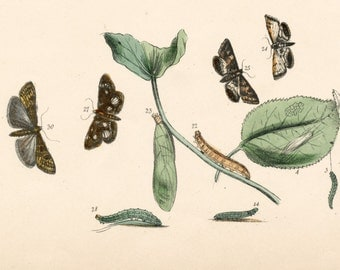 Vintage Botanical Print of Plants and Insects. Plate 76 - Handcolored