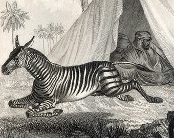 1851 Antique Steel Engraving of Horses and a Zebra. Plate 110