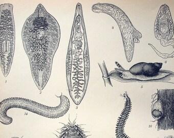 Antique Print of Worms - 1894 German Engraving
