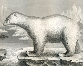 1851 Antique Steel Engraving of Polar Bears, Walruses, Seals, Cats, Hyenas, and Other Animals. Plate 114