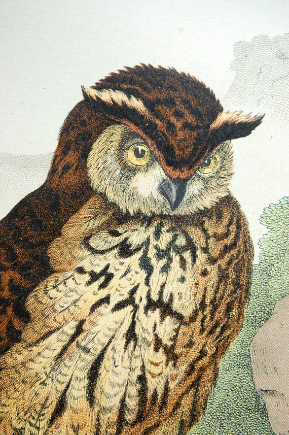 1886 Stunning Large Antique Double Plate Chromolithograph of Owls