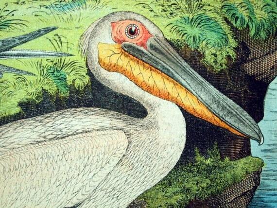 Antique Print of Tern, Skua, Petrel, Albatross, Pelican, and Swans - 1886 Large Chromolithograph