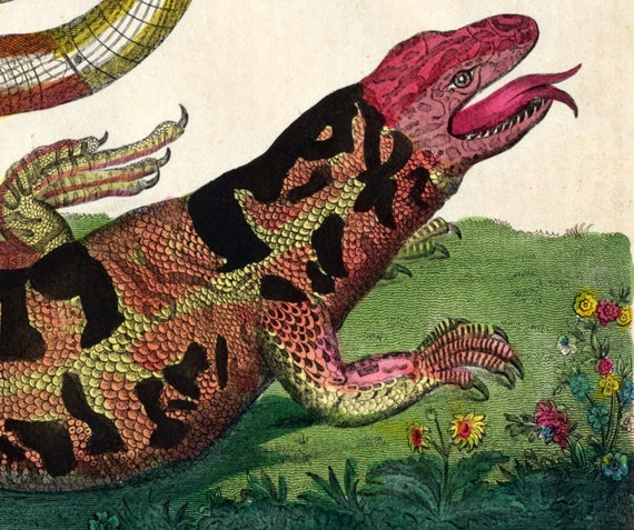 1828 Rare Antique Hand Coloured Lithograph of a Safeguard Lizard. From Buffon's Natural History