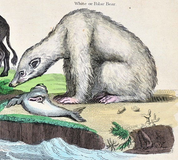 1828 Rare Antique Hand Coloured Lithograph of Polar Bear, Boars, Hippopotamus. Plate 38. From Buffon's Natural History.