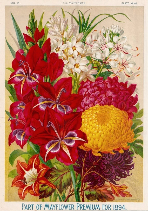 1890s Gorgeous Antique Chromolithograph of Premium Flowers