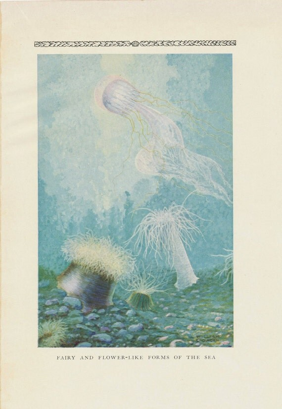 1928 Set of Three Antique Prints on Marine Life: Fairy Forms and Saltwater Life