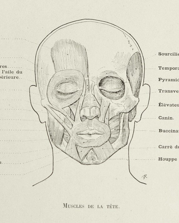 1890 Large Antique French Anatomy Engraving of Facial Muscles. Plate No. 36