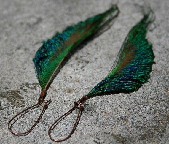 Long Feather Earrings - Peacock Earrings on Copper Kidney Wires - Copper River