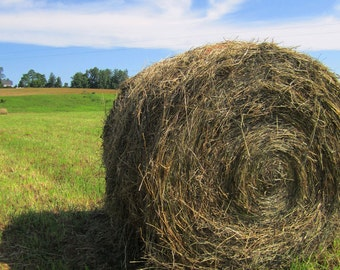 Rollin' in the Hay - Otego, NY /  8 x 10  Print - /Home Decor/ Wall Decor/ Affordable Fine Art