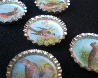 Spring Song Birds Bottle Cap Magnets Set of 5
