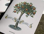 Lago di Garda Frutta original art reproduction botanical fruit tree set of 4 cards
