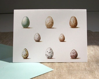Wild Bird Eggs Cards set of 6