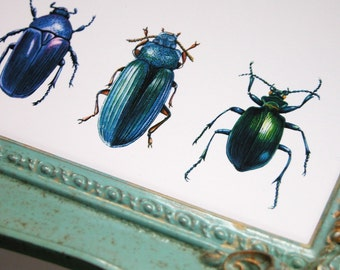 beetles and weevils gardening art original reproduction natural history print
