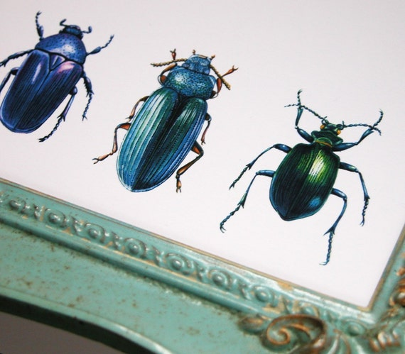 beetles and weevils gardening art original reproduction natural history print