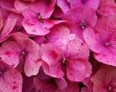 Pink Hydrangea Flower Blank Photographic Greeting Card