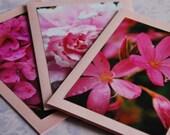 Pretty Pink Kaffir Lily Blank Photographic Greeting Card