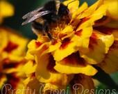Bumblebee on Marigold Blank Photographic Greeting Card