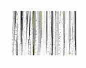 Art Print, Wall Decor, Western Highland Birch