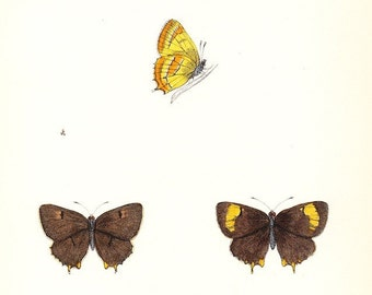 Brown Hairstreak .  Antique Butterfly Print . plate 41 . old woodblock dated 1853 . old vintage art plate entomology