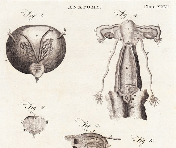 RESERVED LISTING for kgoodies . Antique Anatomy Print . Reproductive Organs . plate XXVI . original engraving art dated 1797