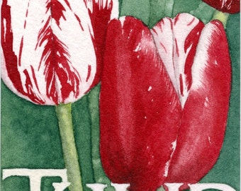 Ruby Red TULIP Original Watercolor ACEO