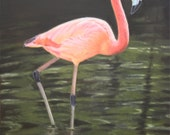 Flamingo, Print of a Painting by Jimmie