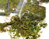 Preserved Mountain moss-3 types to choose from-Small 3x6 bag-Shredded Sphagnum Moss-Forest Moss-Craft projects-Terrariums-We...