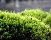Terrarium Moss-Live Moss- Mood Moss Gallon Bag full LIVE Green Mood-Frog Moss-Live Moss for Terrariums and Vivariums