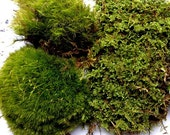 Mood Moss and  Fern Moss-Sandwich Bag-Great for terrariums and Vivariums-Sheet Moss