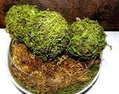 "4"" Pomander Moss Ball-Beautiful Hand made balls of Moss-Wedding favors-Fairy party"