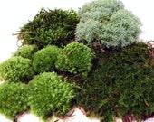 Live Moss Quart Bag of 4 moss varieties