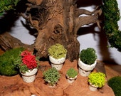 3 assorted sized Splattered Spring Miniature Flower pots filled with Lichens-Set of 3 pots 1 large and 2 small