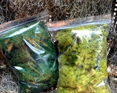 Reindeer Moss 4 Oz Preserved in 3 Colors-Chartreuse-Forest Green-Natural-Terrarium supplies-Air Plant supplies