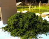 Real Moss-BULK Moss 3 styles-Preserved box filled with no less than 1  1/2 pounds -Sphagnum Moss-Wedding Decor-Basket filler-woodland moss