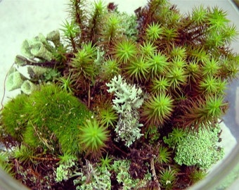 Moss of the Month club 6 month membership-Get new moss and lichens and more delivered to your mailbox every month