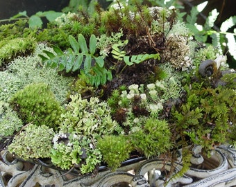 Moss of the Month Club-12 months of moss lichens and more Wedding Gift-Birthday Gift-Anniversary-Graduation-I Love You and More