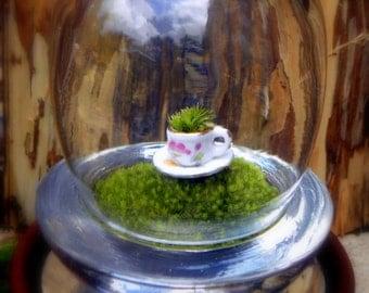 Green Tea Terrarium-Miniature teacup filled with moss on a moss mountain