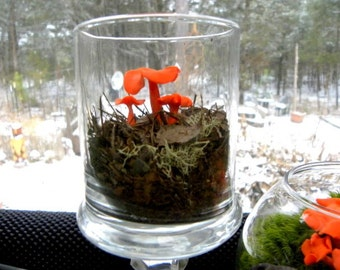 Orange Mushroom-Froggy chair or Snail Umbrellas-Clay Mushrooms-1 mushroom Here