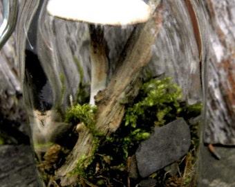 Mushroom-1 Mysterious one of a kind Clay Mushrooms for terrariums and more-Choose from small medium or large