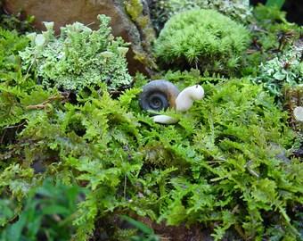 Live Moss-Fern Moss-Quart Bag-Great for terrariums and Vivariums-Sheet Moss