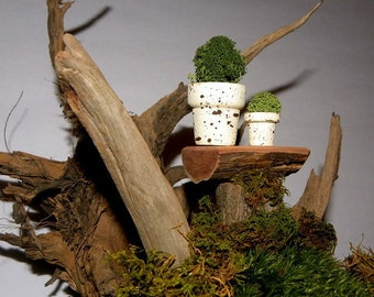 "3-1"" Splattered Spring Miniature Flower pots filled with Lichens-Set of 3 pots in the larger size seen here"