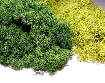 4 Oz Preserved Reindeer Moss in 3 Beautiful Colors-Spring Green Or Forest Green and natural